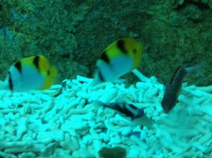More colourful fishes at S.E.A. Aquarium