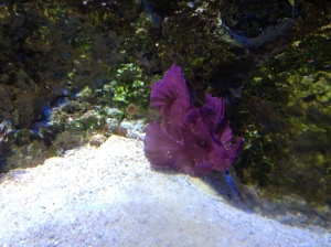 Pretty camouflage Scorpion Fish 2