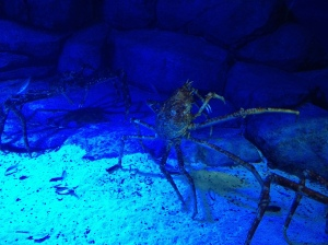 Giant crab at S.E.A. Aquarium
