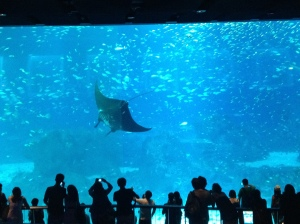 Massive Manta Ray at S.E.A. Aquarium