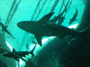 Sharks at S.E.A. Aquarium