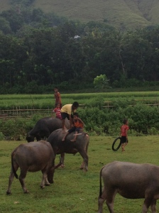 Sumbanese children playing with water buffaloes