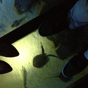 Walking on water at S.E.A. Aquarium Resorts World Sentosa