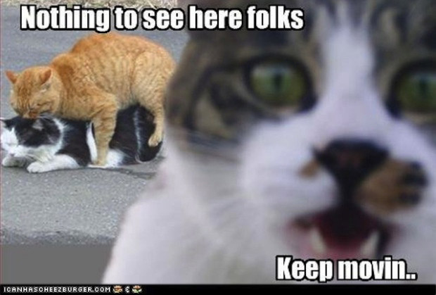 [Image: cat-nothing-to-see-here-meme.jpg]