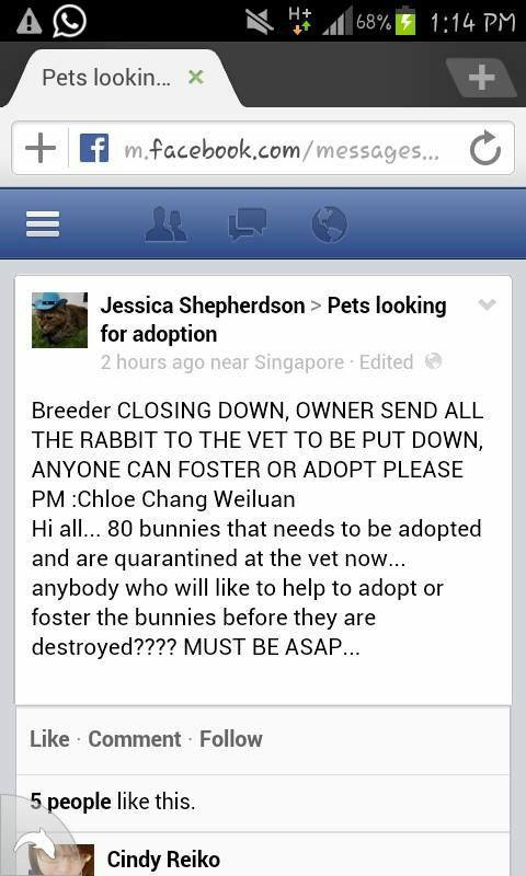 80 rabbits up for adoption