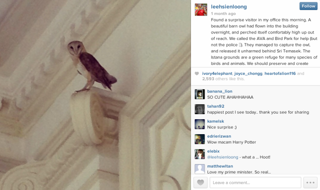 LHL Owl Instagram