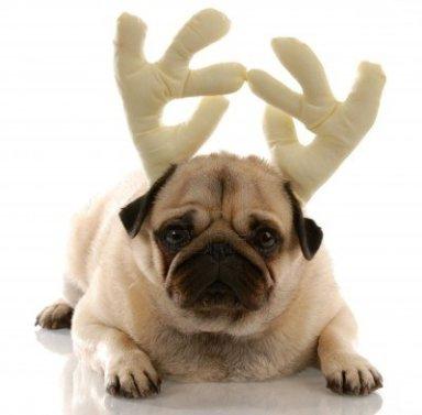 pug-wearing-reindeer-antlers